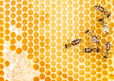 Working bees on honeycomb Imagens