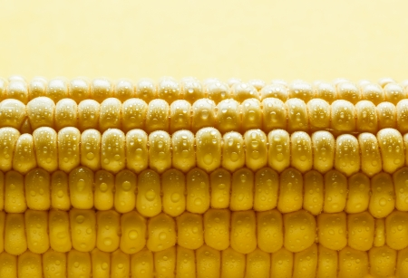 Fresh corn cob with water drops photo