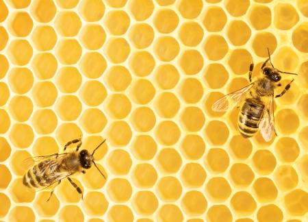 praiseworthy: Working bees on honeycomb Stock Photo