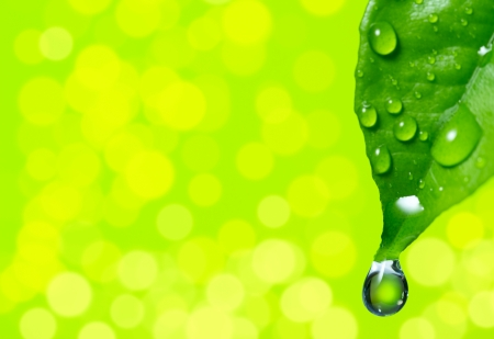 Green leaf with water drop on spring background