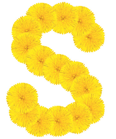 letter head: Letter S made from dandelion flowers isolated on white background Stock Photo