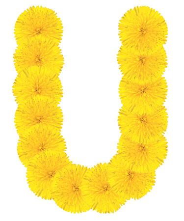 Letra U hecha de flores de diente de le�n aislados en el fondo blanco