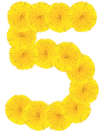 number 5: Number 5 made from dandelion flower isolated on white background