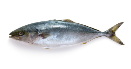atún: Atún sin procesar aislado en el fondo blanco Foto de archivo