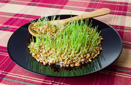 mingle: Germinated grain on black plate with wooden spoon Stock Photo