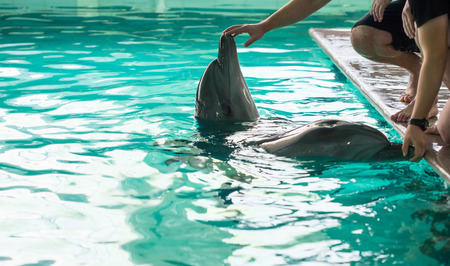 grampus: Two dolphins in blue swimming pool