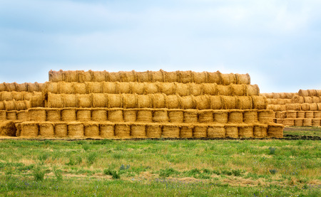 haymow: Agricultural field where harvested cereals and straw collected in a stack. summer