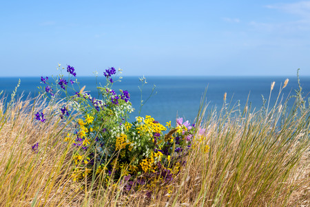 Wildflowers on blue sea and skies background