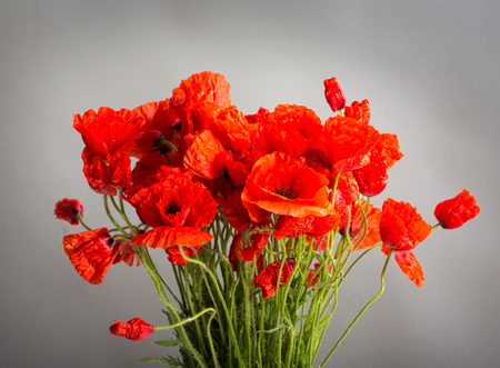 Bouquet of poppy flowers on grey background