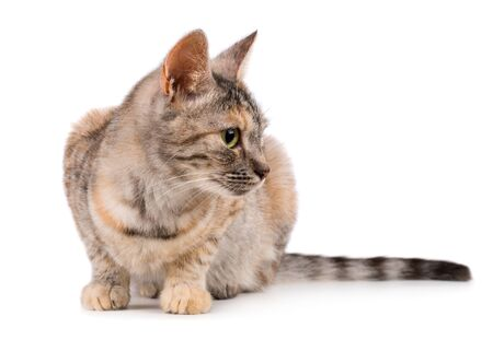 Pretty small angry cat isolated on white background