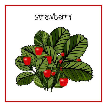 Vector Illustration Icon von reifen Erdbeeren, Himbeeren, Kirschen, Brombeeren, schwarzen und roten Johannisbeeren, Blaubeeren mit Blättern
