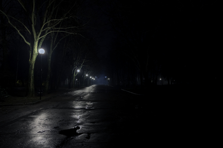 photo of an avenue of a park at night with street lamps and wet asphalt
