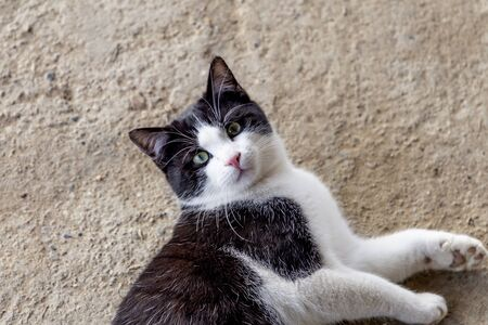 close up portrait of a black and white cat in the countryside Imagens