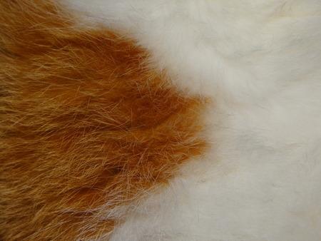 animal fur: animal fur Stock Photo