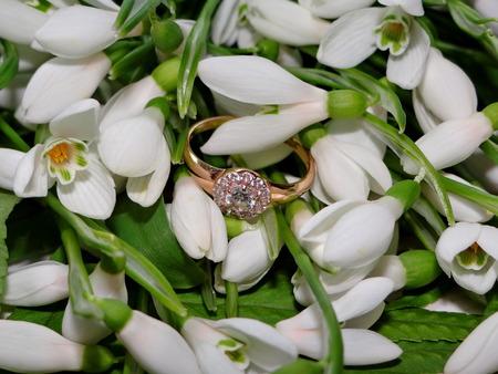 snowdrops: snowdrops, diamond ring Stock Photo