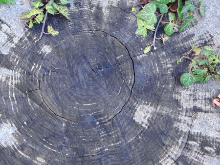 drank: wooden texture