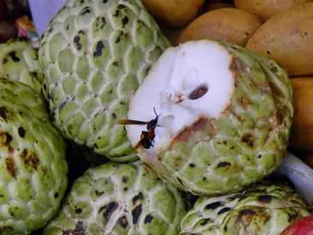 tropical fruit Reklamní fotografie