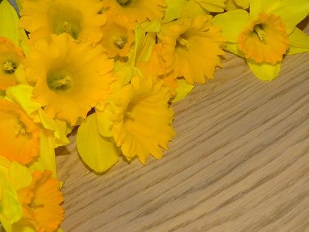 daffodils: flowers daffodils Stock Photo