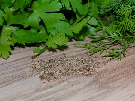 perejil: semillas de perejil