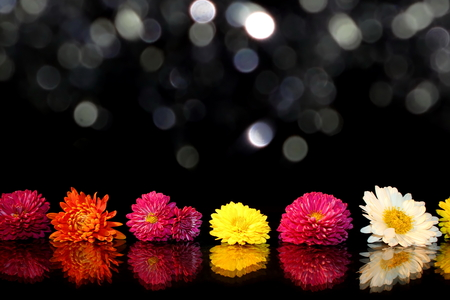 aster flowers on a black background Stock Photo