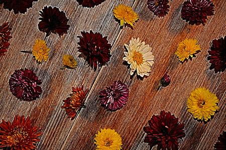 Flowers Reklamní fotografie - 96651692