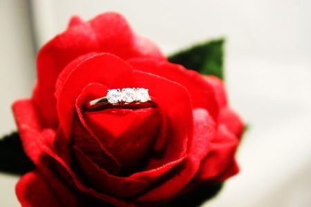 trilogy: Diamond in a red beautiful Rose