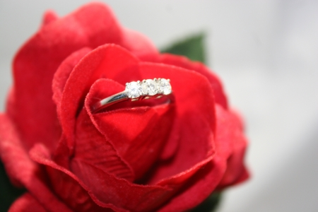 trilogy: Diamond in a red rose Stock Photo