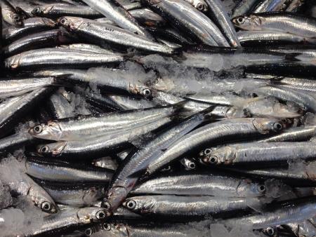 sanremo: Fish at sea market in Sanremo Italy Stock Photo