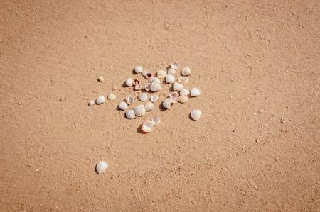 Pile de coquillages sur un sable rouge des rives de la mer d'Azove se trouvant dans le désordre. Banque d'images