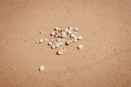 Pile of seashells on a red sand of Azove sea shores lying in disorder.