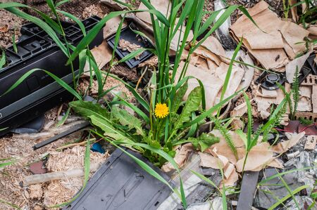 Burned garbage on soil with fresh dandelion and green grass growing throuh it. City scrapyard.