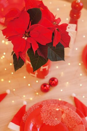 Red bouquet of poinsettia on a dining table with holiday lights behind. Christmas kitchen decorations.