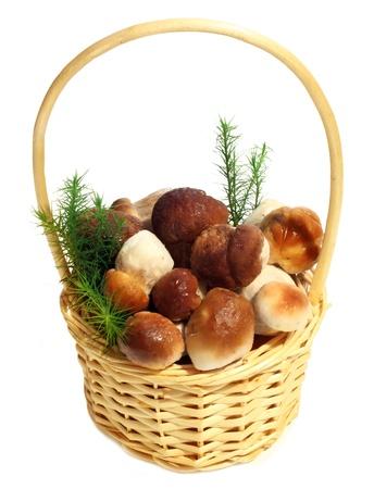 Boletus Edulis mushrooms in straw basket isolated on white background  photo