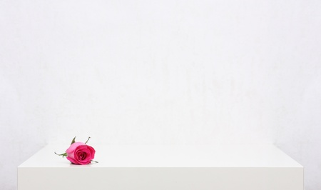 Red rose on the white shelf photo