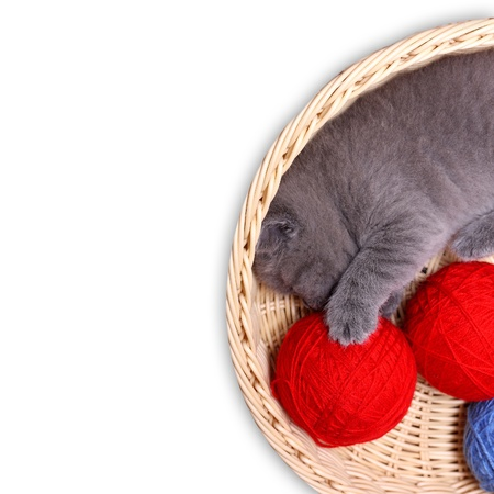 whiskar: Kitten in straw basket with ball of yarn on a white background