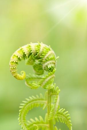Fresh spring green fern Stock Photo - 12711281