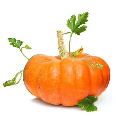single object: Pumpkin vegetable isolated on white