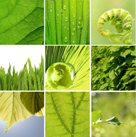 photosynthesis: Green leaves collage