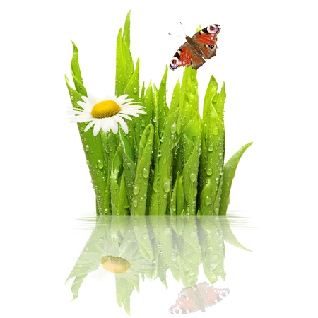 Fresh green grass with water drops, isolated on white Stock Photo - 12711243