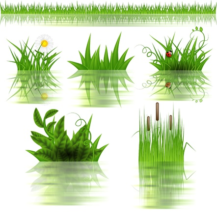 Grass set with reflection in water  Stock Vector - 12711845