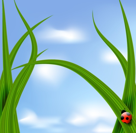 Vector grass against blue sky and ladybird Vector
