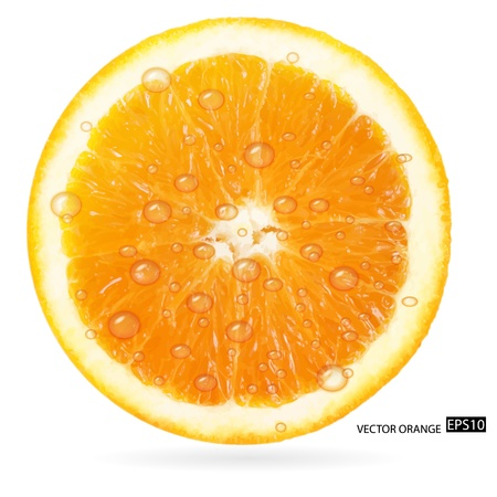 Orange fruit with water drops isolated on white background  illustration Vector