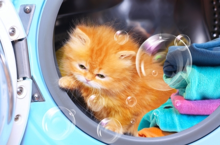 laundromat: Red kitten and soap bubbles in open washing machine  Stock Photo