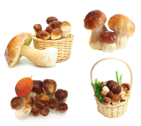 Boletus Edulis mushrooms in straw basket isolated on white background  photo