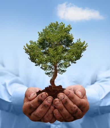 Man hands holding green tree  Ecology concept Stock Photo - 17306787