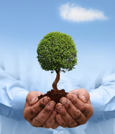 Man hands holding green tree  Ecology concept Stock Photo