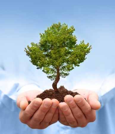 Man hands holding green tree  Ecology concept Stock Photo - 17306336