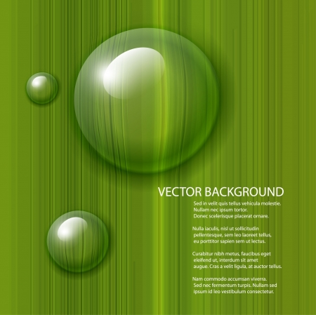 Vector water drops on green leaf macro background  Vector