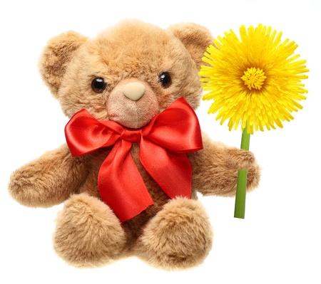 osos de peluche: Cl�sico oso de peluche con flor lazo rojo que sostiene aislados en fondo blanco