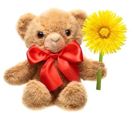 Classic teddy bear with red bow holding flower isolated on white background photo